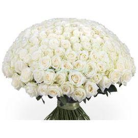 Белые розы 201