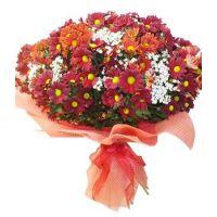 Поляна хризантем