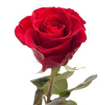 Голландская роза поштучно
