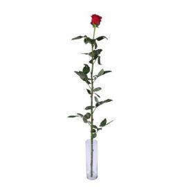 Метровая роза поштучно