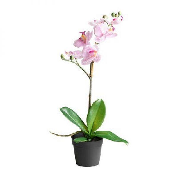 Поздравление к подарку цветы орхидеи #13